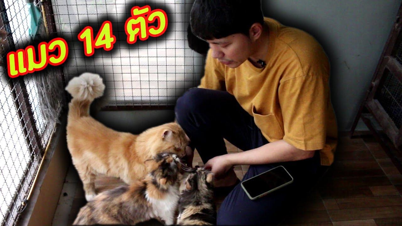 แมวทั้งบ้าน 14 ตัว เลี้ยงยังไงไหวววววว