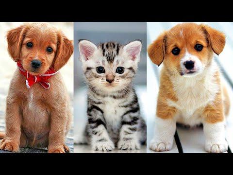 Собачий Рынок - Продажа Собак и Кошек!!! Староконный рынок Одессы - Рынок Животных