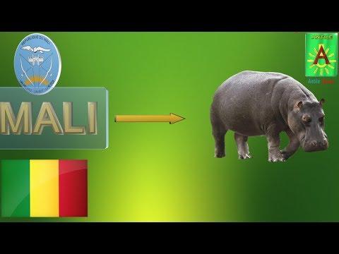 le nom donné à mali signifie-t-il hippopotame? comment le mot mande, maninka, malinké est-il venu