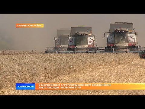 В Мордовском агропромышленном объединении бьют рекорды урожайности
