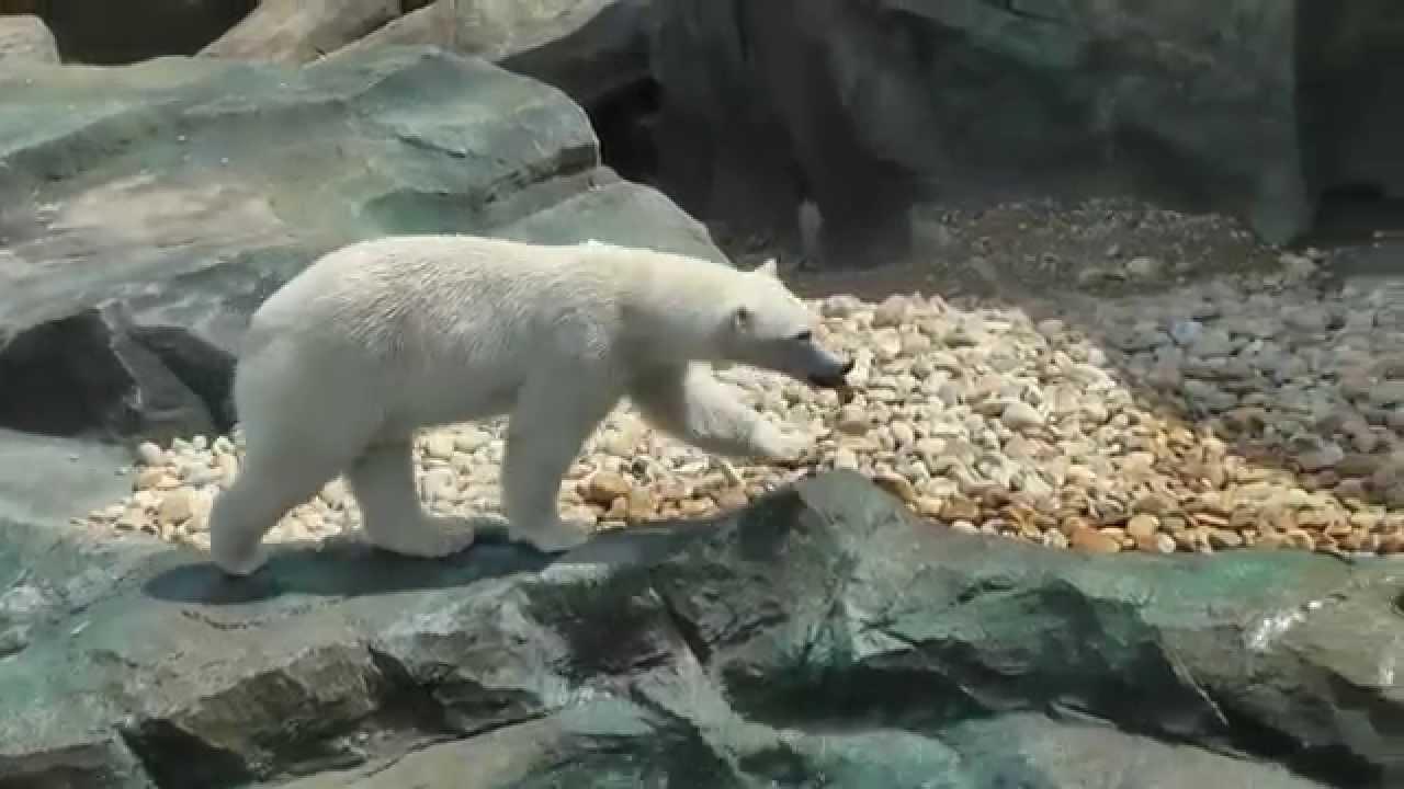 Eisbärenanlage nach Umbau - 2014 Tierpark Schönbrunn