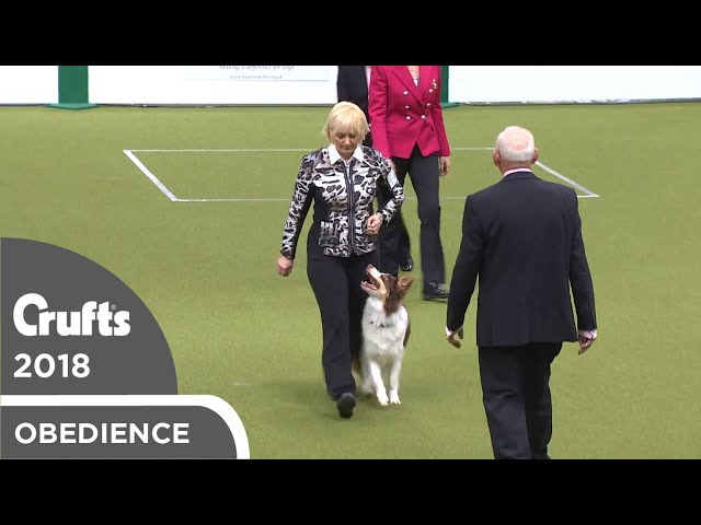 Obedience - Bitch Championship - Part 16 | Crufts 2018
