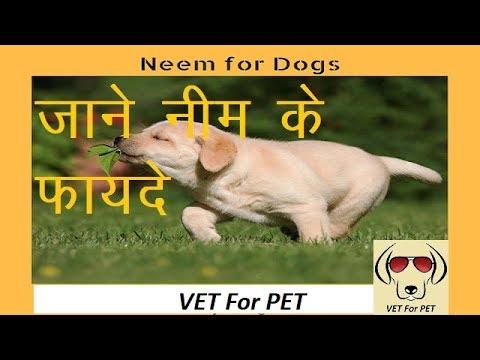 Uses Of Neem In Dogs ||VET For PET||