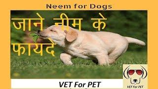 Uses of Neem in Dogs   VET for PET  
