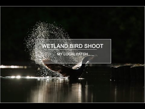 Nature Photography - Wetland Bird Shoot - My Local Patch