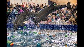 Шоу Дельфинов тайны семи морей в Тюмени 2018