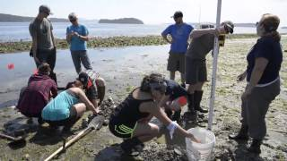 Learning by the Sea: Place-based Learning on a Clam Garden