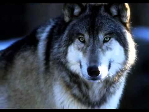 клип песни леонидова волки