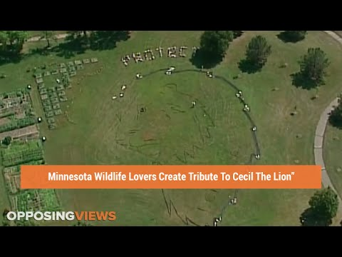 Minnesota Wildlife Lovers Pay Tribute To Cecil The Lion In ...