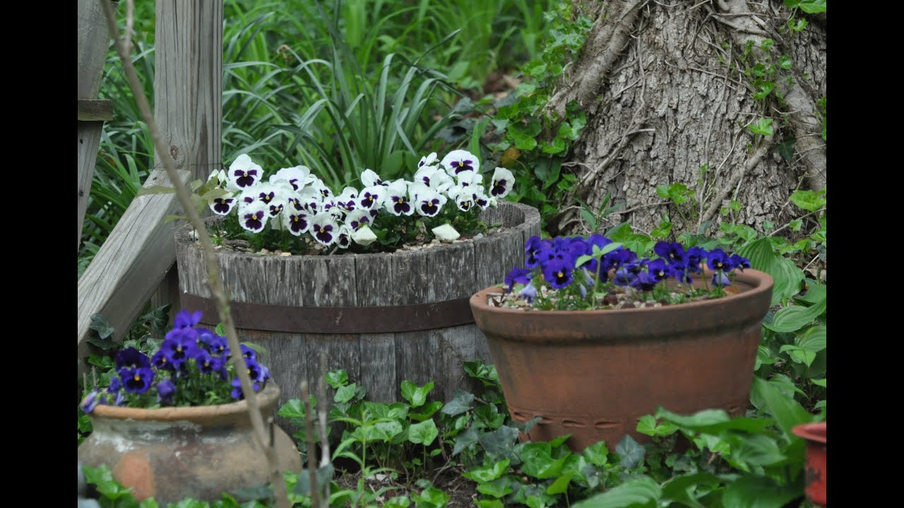 Summer 2015 Cottage Garden With Only The Sounds Of Nature