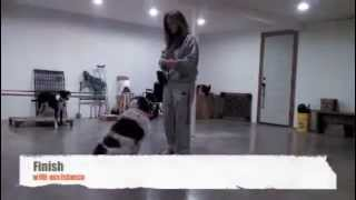 Level 2 Dog Obedience Class Test Demonstration: Freckles