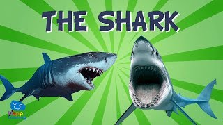 Sharks: The scariest animals in the sea | Educational Videos for Kids