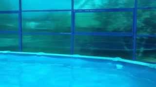 навес из поликарбоната для бассейна на даче видео(По заданию Заказчика был выполнен комплекс работ по изготовлению и монтажу навеса из поликарбоната над..., 2014-08-18T16:03:31.000Z)