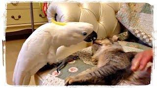 ПРИКОЛЫ С ПОПУГАЯМИ, приколы с животными | FUNNY PARROTS, fun with animals #515