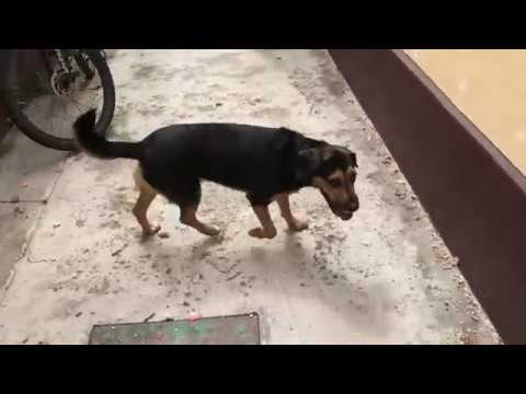 Dante az új kutya