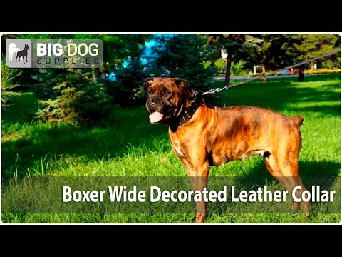 "Boxer Dog Walking - Exclusive Wide ""Crazy Combo"" Collar"