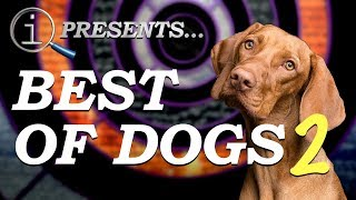 QI Compilation | Best Of Dogs 2