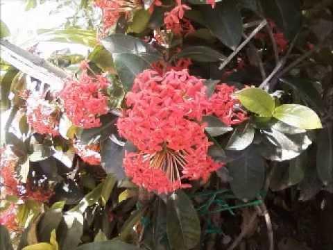 Plantas exoticas youtube for Plantas de interior exoticas