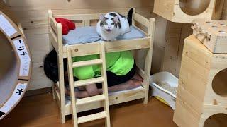 猫用ベッドの強度を試す?息子
