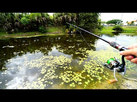 Exploring Fishing Canals In Florida