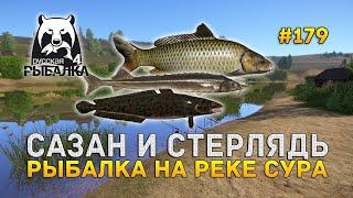 РР 4 р Сура Сазан Стерлядь Сом