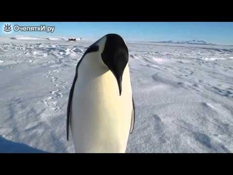 Как можно назвать пингвина