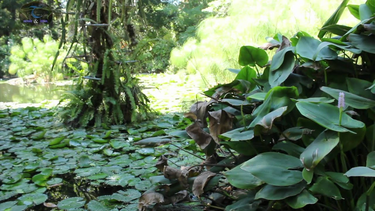jard n botanico plan de la laguna youtube
