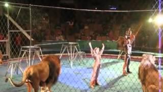 Repeat youtube video Orribile incidente al circo, i leoni attaccano il domatore