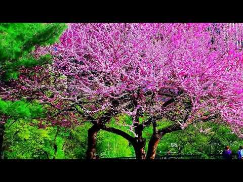 Сборник самой красивой на свете музыки!!! Дмитрий Метлицкий & Оркестр/Beautiful Instrumental music
