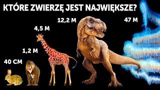 Porównanie gabarytów zwierząt (wieloryby wcale nie są największe!)