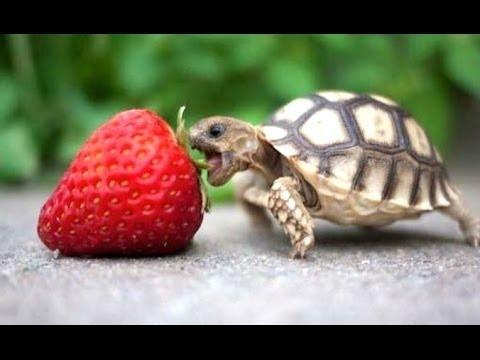 Penyu - lucu dan lucu kura-kura video. kompilasi | Baru, HD