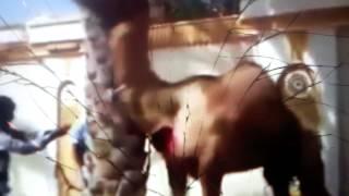 АРАБСКИЕ VIDEO