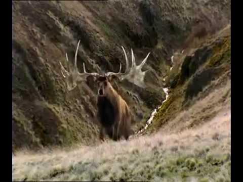 Channel 4 Extinct  The Irish Elk