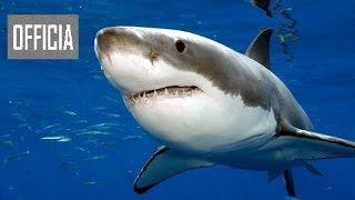 Смертельно опасные — Австралия (Документальные фильмы Discovery HD) борьба животных