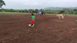 Funny Football 🏀 ⚽️ Video