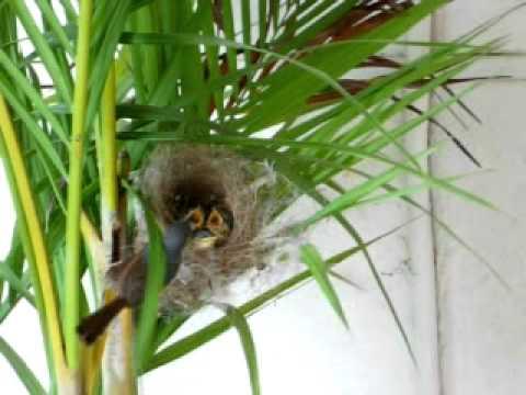Mother Bird feeding babies-1
