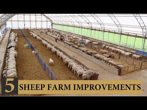 Five INEXPENSIVE Ways I Improved Our Sheep Farm: Vlog 143