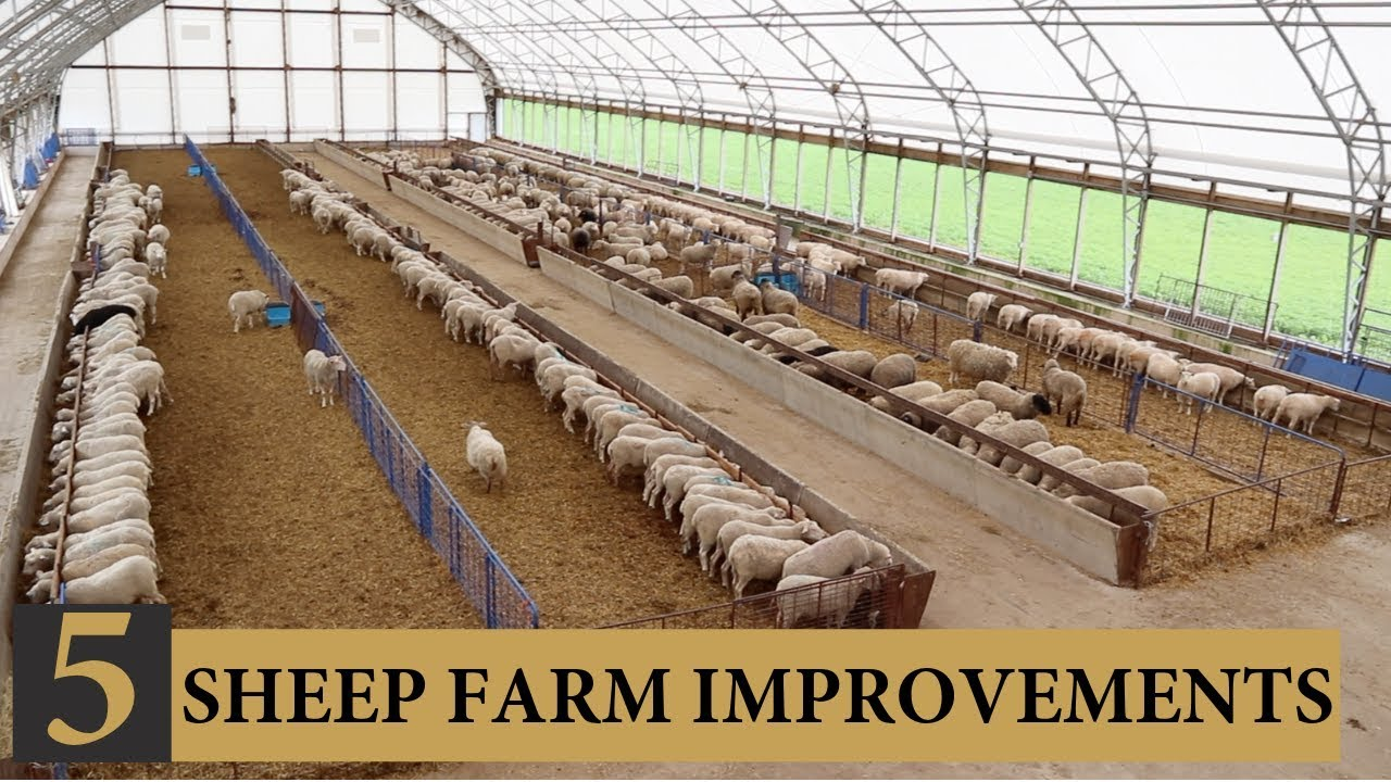 Download Five INEXPENSIVE Ways I Improved Our Sheep Farm: Vlog 143