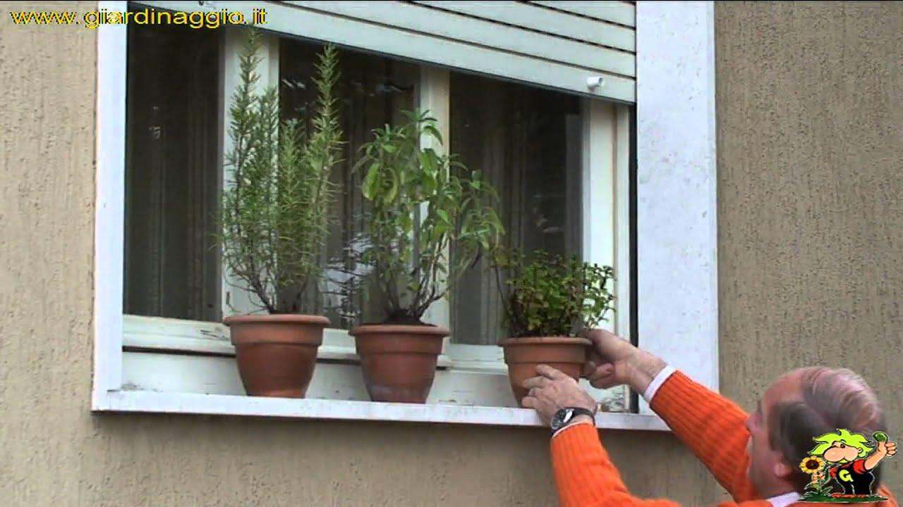 Coltivare In Casa Piante Aromatiche coltivare le aromatiche in casa