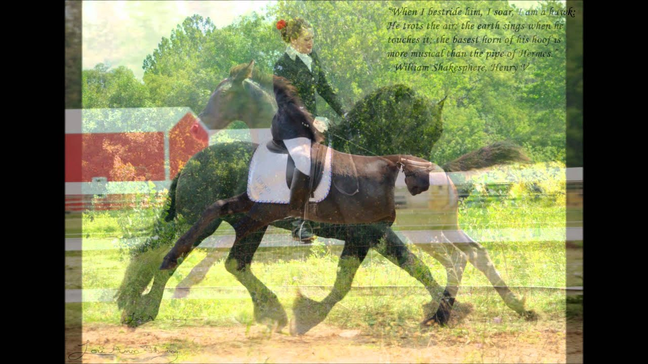 I Believe Can Fly Friesian Horses
