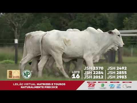 LOTE 16 | JSH 2370 - JSH 2284 - JSH 2012 - JSH 2492 - JSH 2855 - JSH 2983