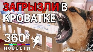 В Томске домашние собаки загрызли младенца в детской кроватке