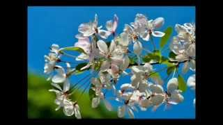 Perez Prado - Cherry Pink and Apple Blossom White