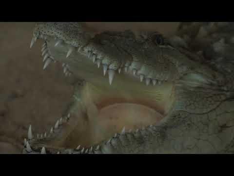 Крокодил избегал од Зоолошката градина во Скопје