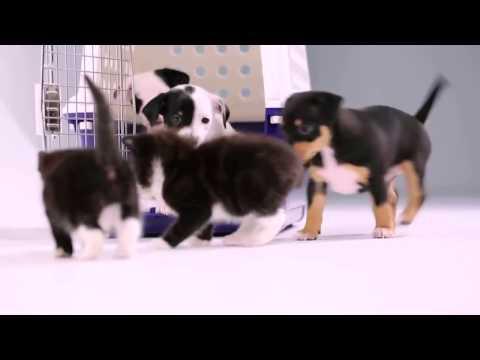 Собаки и щенки в Новосибирске . Фото и цены -