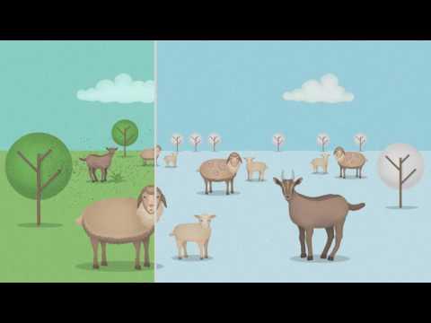 Цифлунит Флок-удобный в применении инсектицид в форме готового спрея с длительным периодом защиты, специально для овец и коз.