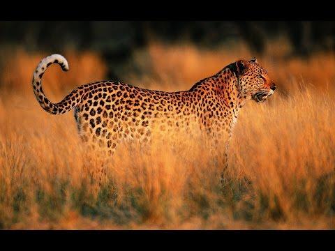 Ein Jahr in der afrikanischen Savanne Doku
