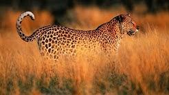 Ein Jahr in der afrikanischen Savanne [Doku]