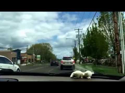 Driving around Corvallis, Oregon
