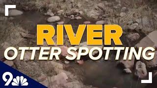 Park ranger spots river otter in Boulder County